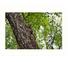 The squirrel protecting his nuts  Art Print