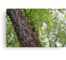 The squirrel protecting his nuts  Metal Print