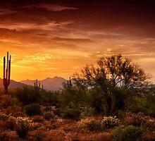 Desert Gold  by Saija  Lehtonen