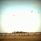 Geese on the Prairies by Goerzen