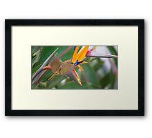 Bird In Mid-flight At Bird Of Paradise Framed Print