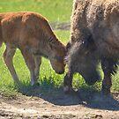 Little Big Bull - The Clash by JamesA1