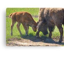 Little Big Bull - The Clash Canvas Print