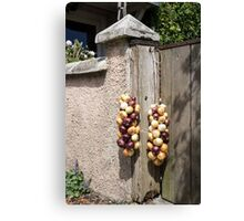 onions tied Canvas Print