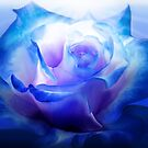 Blue Rose by Cliff Vestergaard