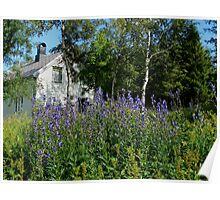 Purple Meadow Flowers and White House Poster