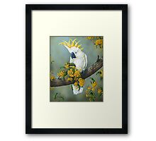 Australian White Cockatoo  Framed Print