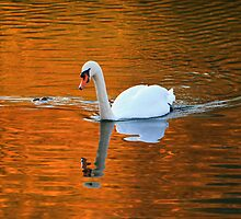 Autumn Swan by Delfino