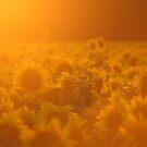 Summer Glow by Lisa Holmgreen