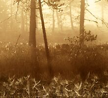 5.9.2013: Cobwebs by Petri Volanen