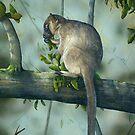 Aust. Tree Kangarro by owen  pointon