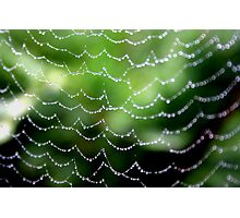 Dewy Web Photographic Print