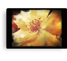 Antique Look Yellow Flower in Summer Sun Canvas Print