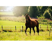 Andalusian Horse Play in Summer Photographic Print