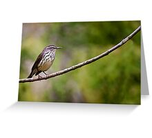 Northern Waterthrush Greeting Card
