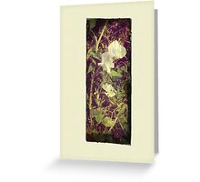Antique Look Print of Pretty Sweet Pea flowers Greeting Card