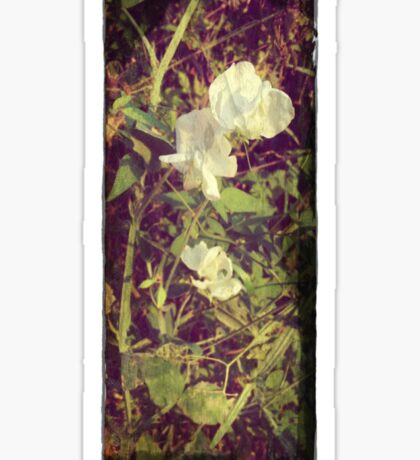 Antique Look Print of Pretty Sweet Pea flowers Sticker