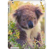 Koala in the Front Yard iPad Case/Skin