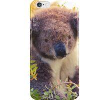 Koala in the Front Yard iPhone Case/Skin