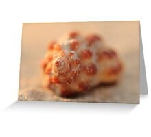 Shell on Cable Beach Greeting Card