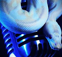 Python & a Shure 55 by whaturthinking