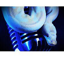 Python & a Shure 55 Photographic Print