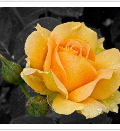Golden rose Sticker