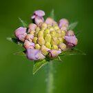 meadow flower by ma-fleur-art