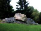 Central Park Rocks by Benedikt Amrhein