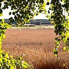 green August window to a field by Susanna Hietanen