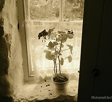 Window on the Past, Cultra, County Down. by Laura Butler
