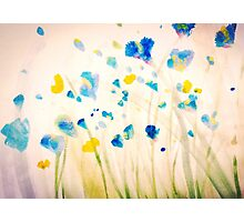 Field of blue flowers Photographic Print