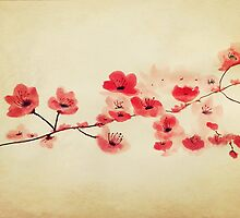 Pink Cherry Blossoms by bardenne