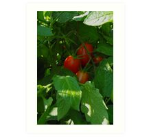 Framed by Leaves ~ Grape Tomatoes Art Print