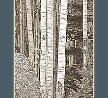 Aspen Grove (Sepia, Blue Border) by Hannelore Dean