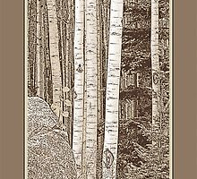 Aspen Grove (Sepia, Brown Border) by Hannelore Dean