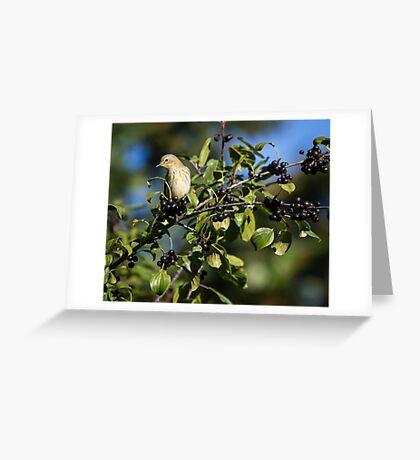 Morning Cape May Warbler Greeting Card