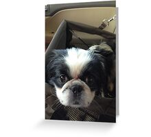 My New Puppy Dog Greeting Card