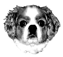 Cocker Spaniel Puppy Engraving by digitaleclectic