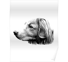 Duck Tolling Retriever Dog Engraving Poster
