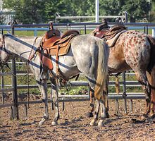 At the Hitching Post by bannercgtl10