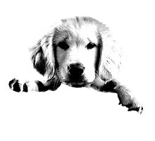 Golden Retriever Puppy Dog Engraving by digitaleclectic