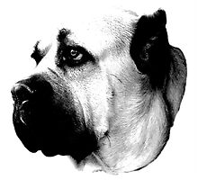 Mournful Dog Engraving by digitaleclectic