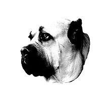 Mournful Dog Engraving Photographic Print