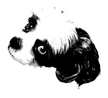 Shih Tzu Dog Image by digitaleclectic