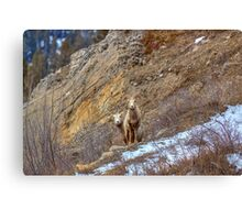 What...is...that...? Canvas Print