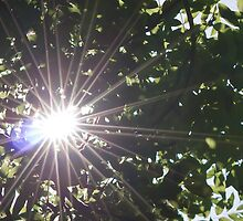 Sun flare through trees by stay-focussed
