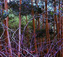 Aspen Nest by ekingrn