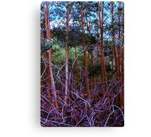 Aspen Nest Canvas Print