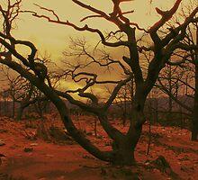 Still on Fire by ekingrn